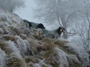 7-Una-fredda-mattina-in-montagna-con-i-miei-cani-Domenico-Pensa_large