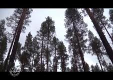Caccia all'alce con Sako Tikka e Steiner in Svezia