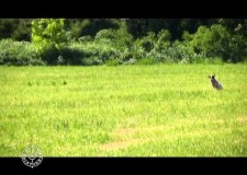 Prova pratica su Quaglie C A C a Villagana BS del 24 05 2014