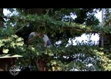 Lavori di potatura al capanno