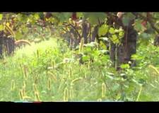 Caccia e Agricoltura – Civiltà Rurale VII – 2013