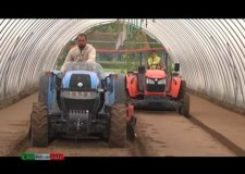 Orticultura – Civiltà Rurale IX – 2013