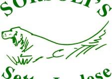 Sorsoli – Allevamento amatoriale di Setter Inglese
