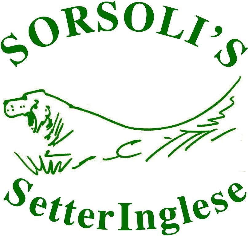 sorsoli's logo