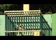 Sagra Uccelli Canori a Brembate – 2015