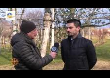 ACR – Intervista al Presidente Trenti del 22 01 2016