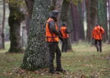 Emilia Romagna : la braccata come controllo faunistico