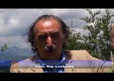 Cacciapensieri : in Lombardia prelievo in deroga più vicino.