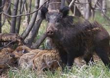 Regione Marche : ricorso animalista respinto al mittente !