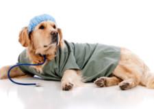Lombardia: cani, gatti e conigli potranno entrare negli ospedali.
