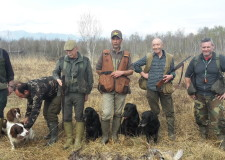 Labrador Retriever e Springer Spaniel: un binomio perfetto.