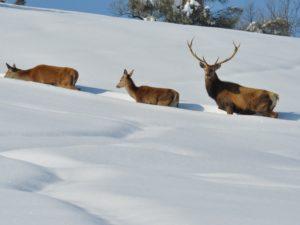 La caccia riequilibra la fauna selvatica