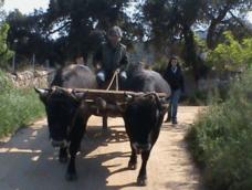 Il Muto di Gallura…a caccia in Sardegna