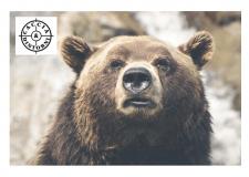 Orso Marsicano – Tre orsi d'Abruzzo annegati in una vasca