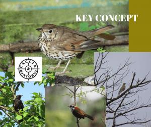 Key Concep - Centinaio ne rivendica la competenza
