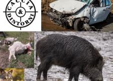 Ritirati in Senato gli emendamenti del buon senso sulla caccia