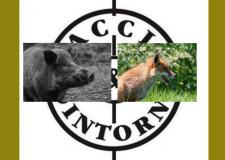 Movimento 5 Stelle:  si spacca sul fronte caccia
