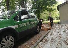Bracconaggio operazione dei Carabinieri Forestali di Bresca