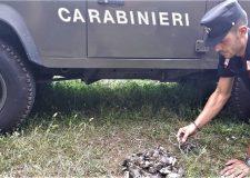 Bracconieri all'opera fermati sorpresi dai Carabinieri Forestali durante alcuni controlli sui monti del bresciano.