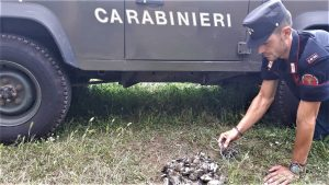 Bracconieri - operazione dei Carabinieri Forestali
