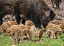 Regione Marche - la Corte Costituzionale zittisce gli animalisti della LA
