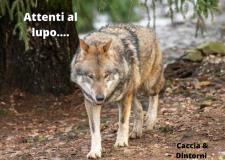 Attenti al lupo , ma anche cinghiali e nutrie : una vera emergenza