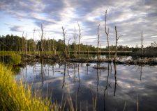 Zona umida : la Commissione EU rispone al Gruppo biodiversità