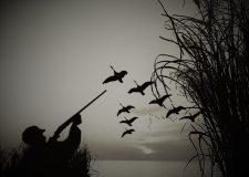 Influenza aviaria - vietato l'utilizzo dei richiami vivi ...anatidi e loro movimentazione