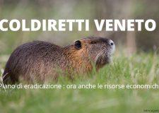 Nutrie – In Veneto mozione per risorse e interventi
