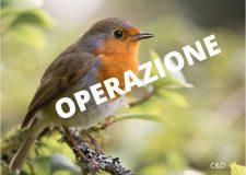 Operazione Pettirosso : ancora accanimento sulla caccia da capanno e sui richiami vivi